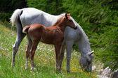 Horses grazing in a prairie — Stock Photo
