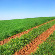 Road in green field. - Stock Photo