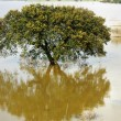 Stock Photo: Tree in Alentejo Lake.