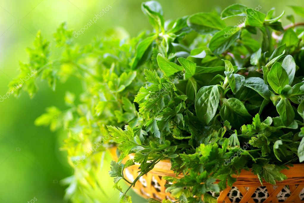 Cooking herbs of portuguese cuisine.  Stock Photo #2824024
