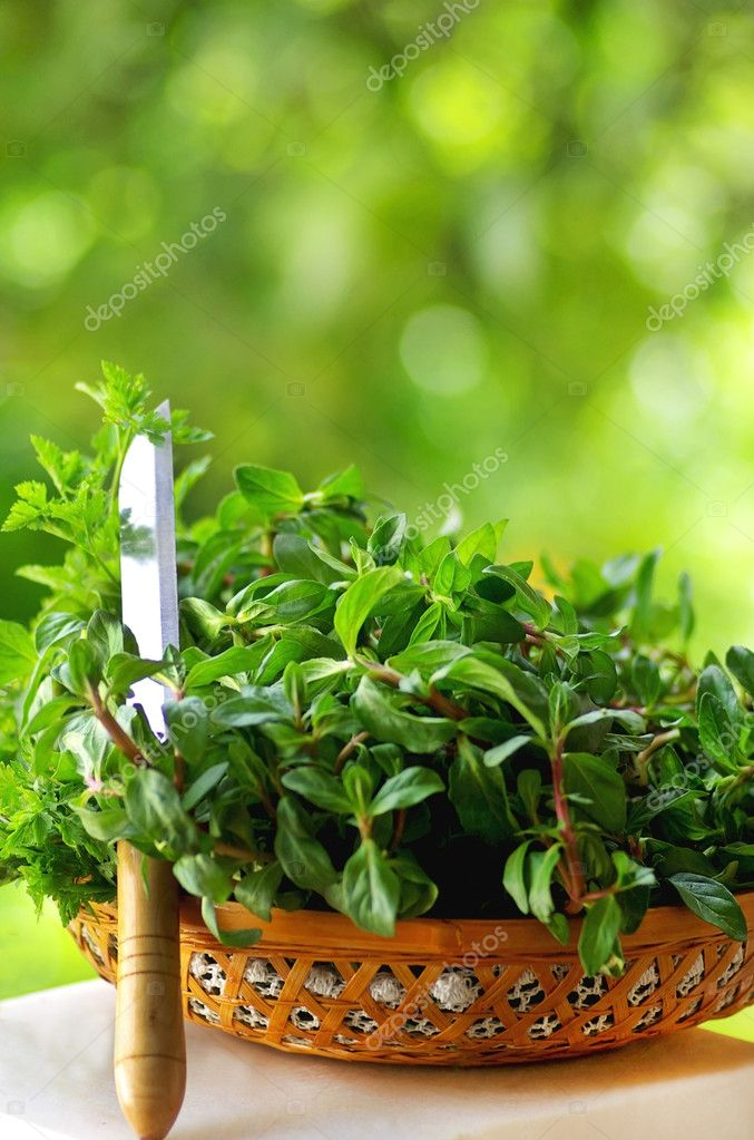 Cooking herbs of portuguese cuisine. — Stock Photo #2824035