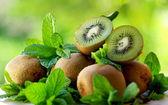 Kiwis and aromatic herbs. — Stock Photo