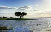 Tree in Alqueva barrage. — Stock Photo