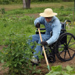 Stock Photo: Handicapped farmer