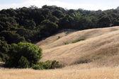California hillside — Stock Photo
