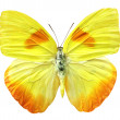 Stock Photo: Yellow butterfly