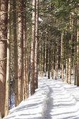 Snow-Scape — Stock Photo