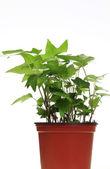 Green inside house plant — Stock Photo