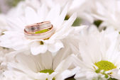 Wedding rings on chrysanthemum — Stock Photo