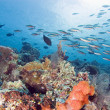 Bustling Reef — Stock Photo #2900952