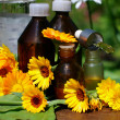 Stock Photo: medical calendula