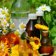 Stock Photo: Medical calendula and camomille