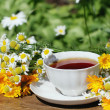Herbal tea - Foto Stock