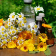 Medical calendula and camomille — Stock Photo