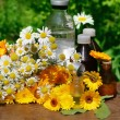 Stock Photo: Medical calenduland camomille