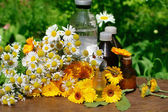 Medical calendula and camomille — Foto de Stock
