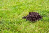 Mole Mound — Stock Photo