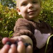 Child offering blueberries - Stockfoto