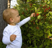 Child picking berries — Stock Photo