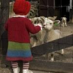 Girl and lambs — ストック写真 #3131511