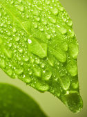 Wet leaf. — Stock Photo
