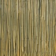 Reed background — Foto Stock