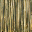 Reed background — Stockfoto