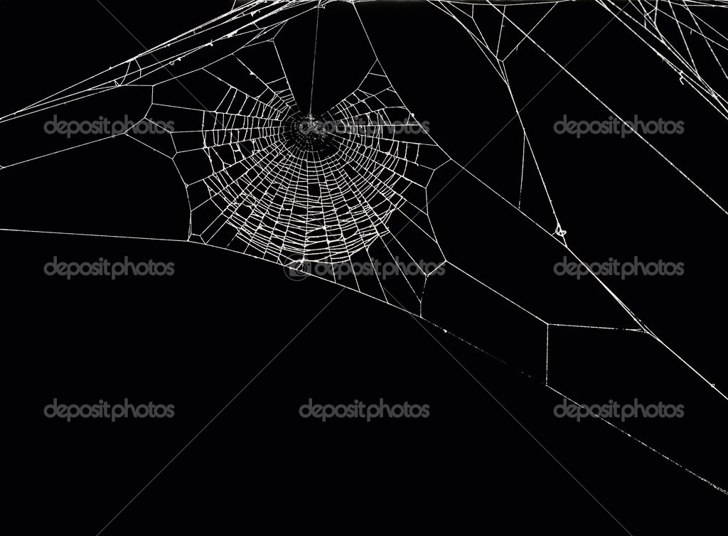 White spider's net isolated on a black background. — Stock Photo #2748368