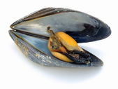 Mussel inside — Stock Photo