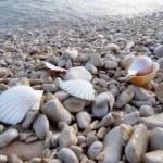 Pebble beach — Stock Photo #2779030