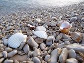 Playa de guijarros — Foto de Stock