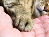 Cat paw — Stock Photo