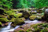 The mountain river in the Crimea — Stock Photo