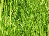 Grass on a summer day — Stock Photo