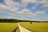 Land landschaft — Stockfoto