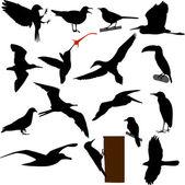 Fåglar siluetter — Stockvektor