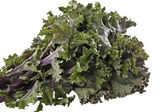 Red Kale — Stock Photo