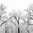 Royalty-Free Stock Photo: Snowy trees