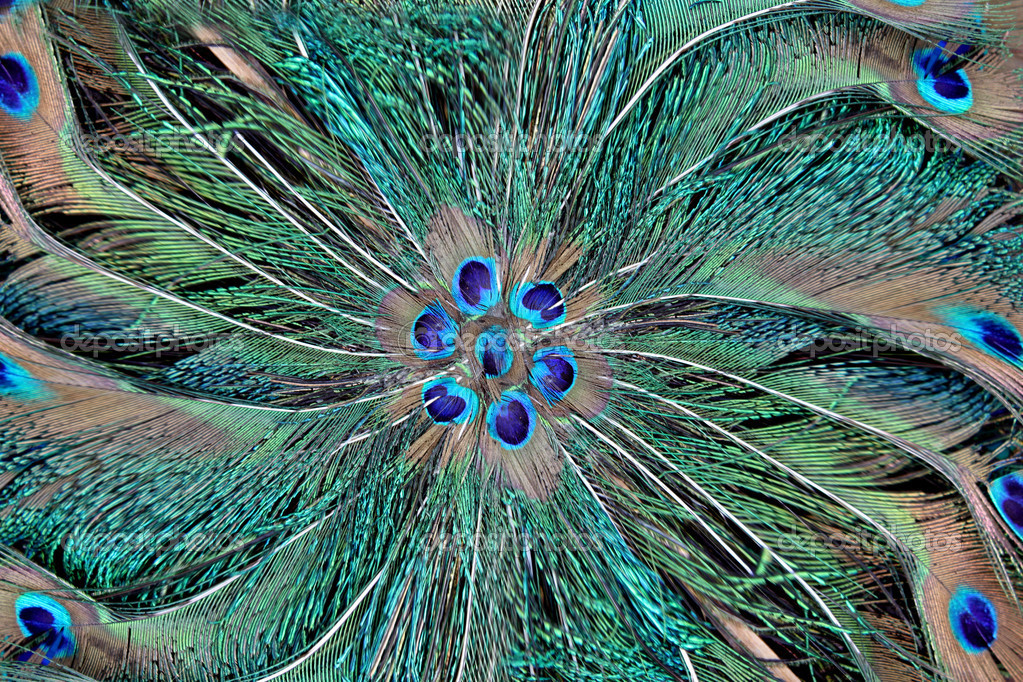 Peacock feather design wallpaper