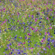 Wild Floral Background — Stock Photo #3000302