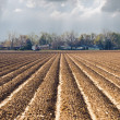 Plowed Earth — Stock Photo