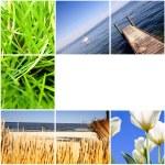 färgglada natur collage — Stockfoto