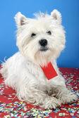 Pies strony — Zdjęcie stockowe
