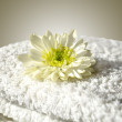 Beautiful white flower on a towel — Stock Photo