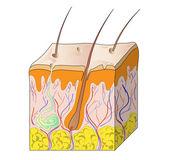 Mänsklig hud — Stockvektor