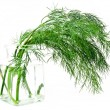 Stock Photo: Fresh green dill