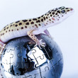 Stock Photo: Small gecko reptile lizard
