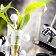 Close-up of plants in test tubes laboratory — Stock Photo