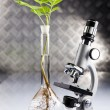 Ecology laboratory experiment in plants - Stok fotoğraf