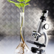 Ecology laboratory experiment in plants - Stock fotografie